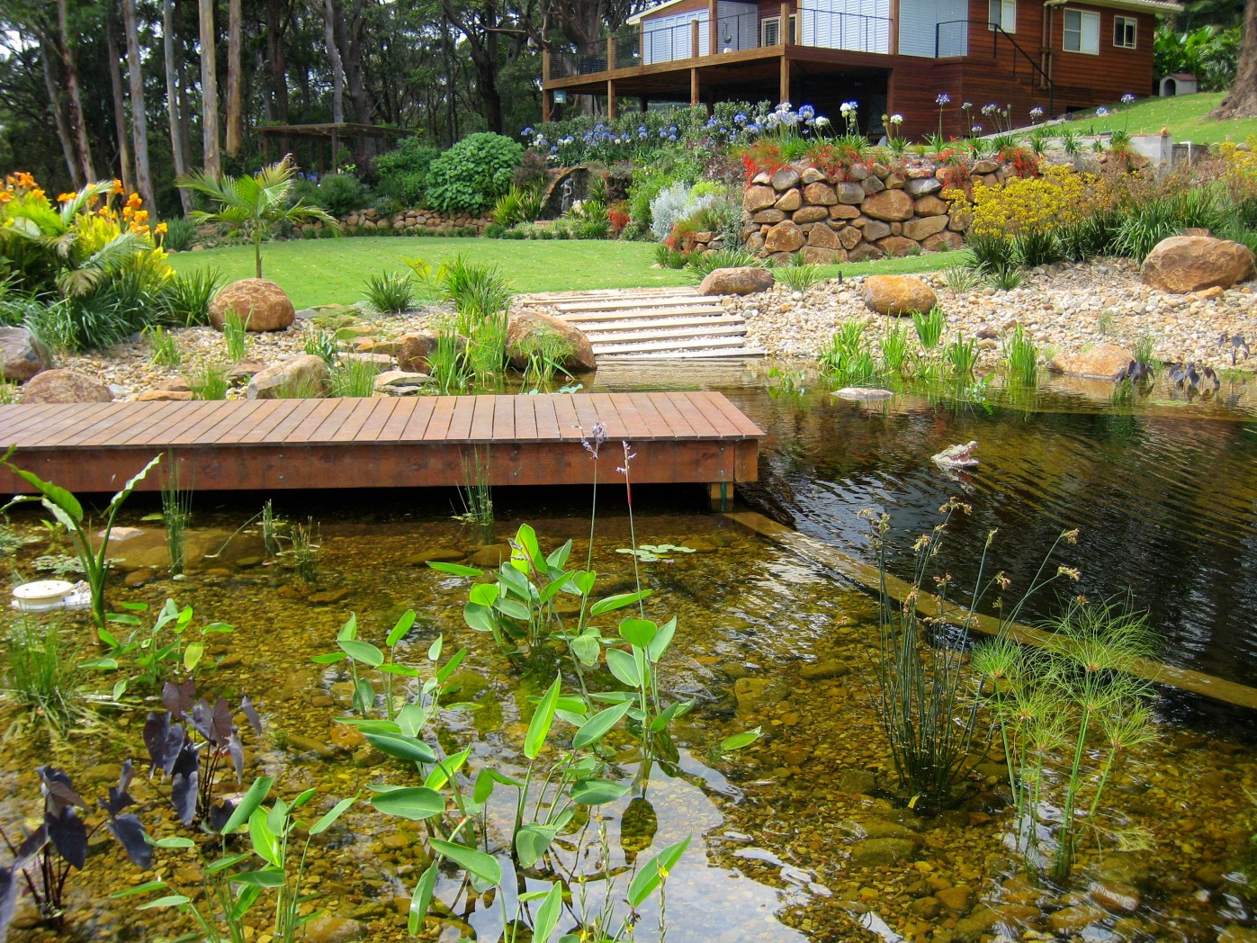 Natural Swimming Pool - After 3